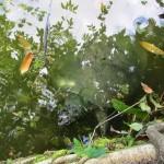 Lago_amazonico